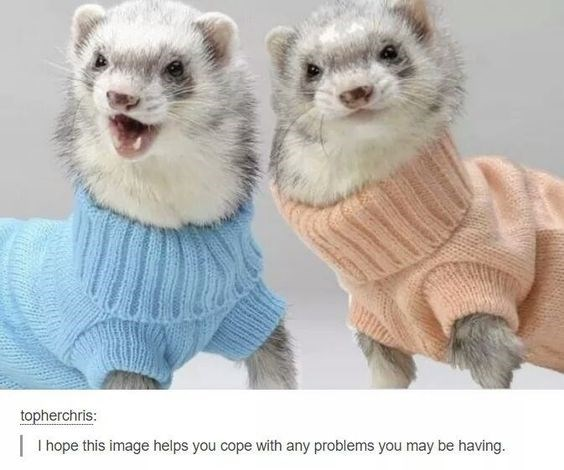 """picture of two ferrets in sweaters captioned """"I hope this image helps you cope with any problems you're having"""""""