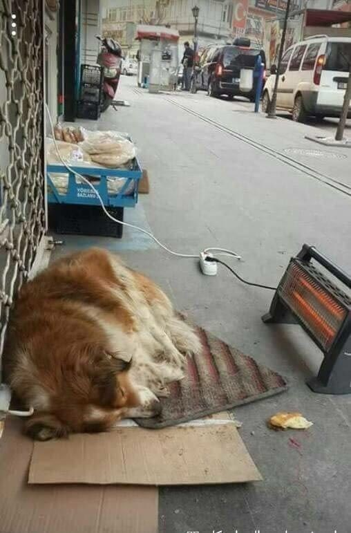 picture of dog sleeping in street with heater placed next to it to keep it warm