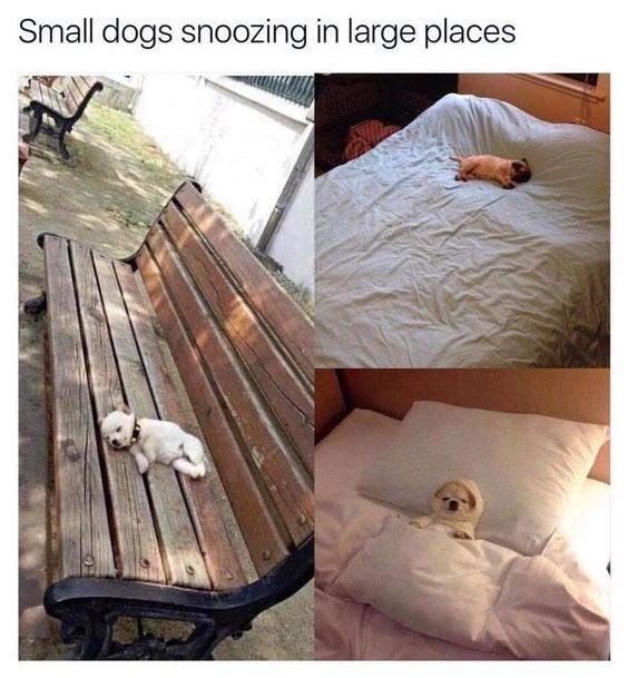 collection of pictures of small dogs sleeping in large places