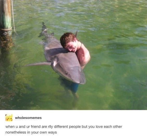meme about you and your friend being different but still loving each other with picture of man hugging shark