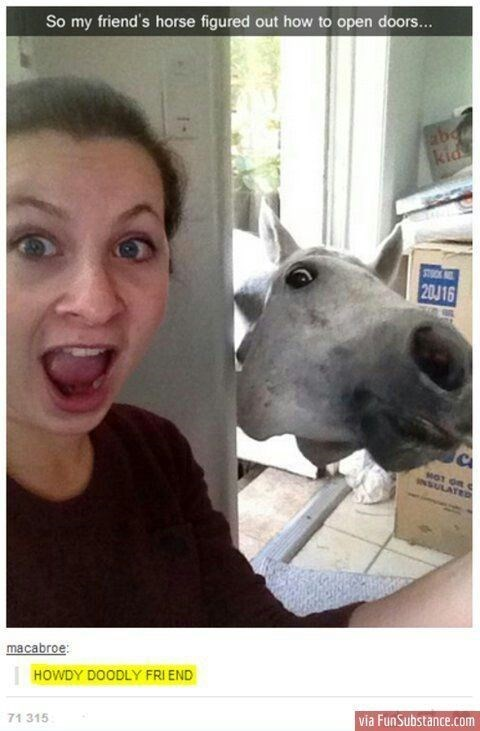 """snap of surprised woman in front of horse that can open doors captioned """"hody doodly friend"""""""