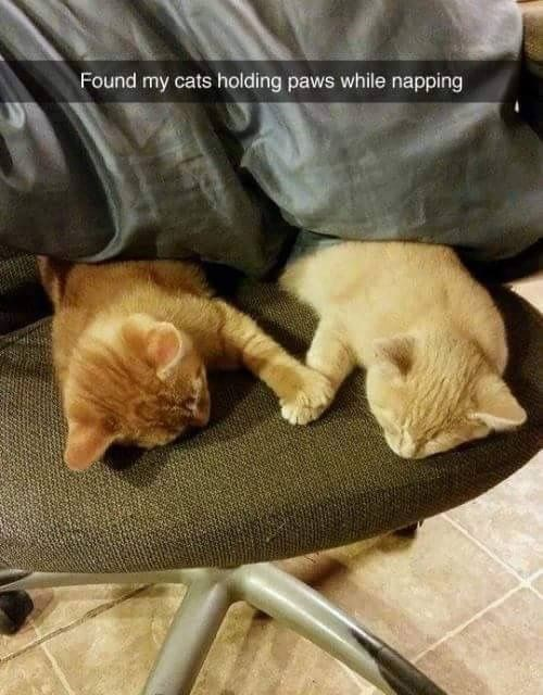 snap of orange ginger cats holding paws while napping