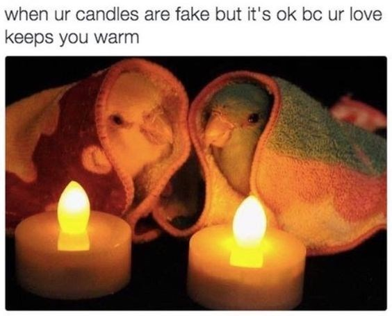 """picture of two small birds wrapped in blankets next to electric candles captioned """"when your candles are fake but love keeps you warm"""""""