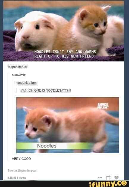 """Tumblr friend reacting to picture of guinea pig and kitten captioned """"noodles isn't shy and warms up to new friend"""" by asking """"which one is noodles"""""""