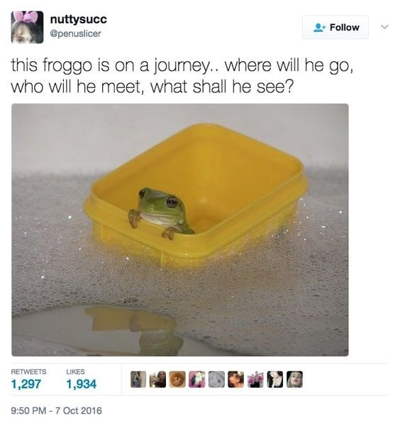 """picture of frog inside floating yellow container captioned """"this froggo is on a journey"""""""