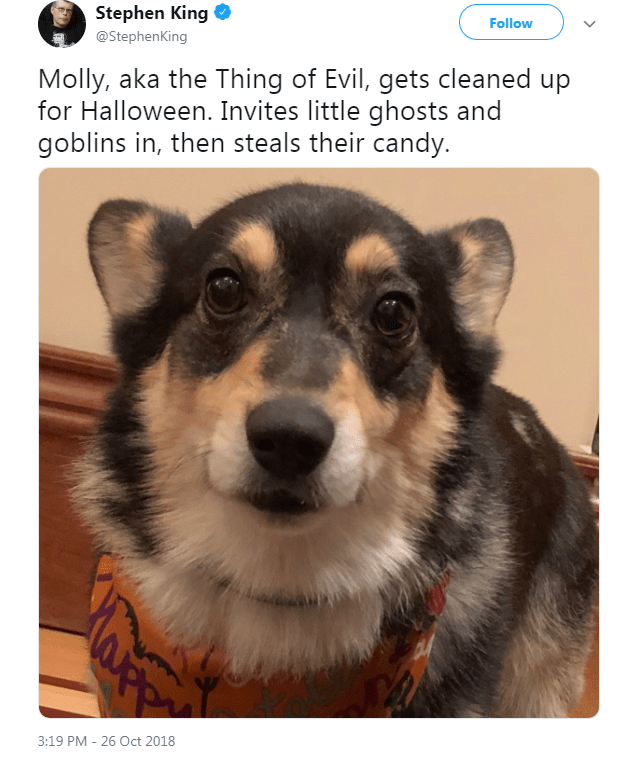 Dog - Stephen King Follow @StephenKing Molly, aka the Thing of Evil, gets cleaned up for Halloween. Invites little ghosts and goblins in, then steals their candy. 3:19 PM 26 Oct 2018