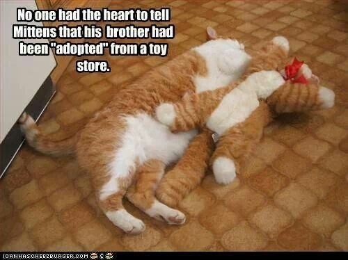 """Cat - Noone had the heartto tell Mittens that his brotherhad been adopted"""" from a toy store. ICANHASCHEE2EURGER cOM"""