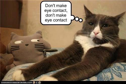 Cat - Don't make eye contact, don't make O eye contact ICANHASCHEE2EURGER cOM