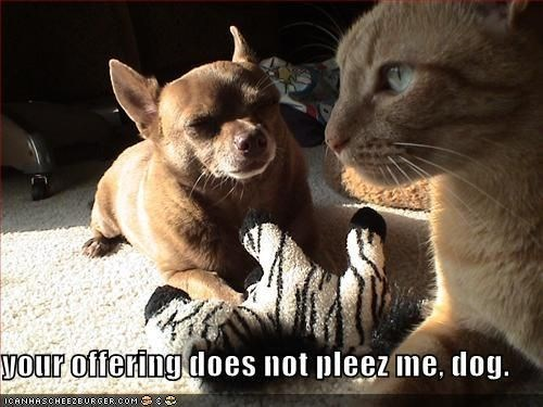 Cat - your offering does not pleez me, dog. ICANHASCHEEZEURGER.COM