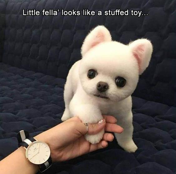 Mammal - Little fella' looks like a stuffed toy..