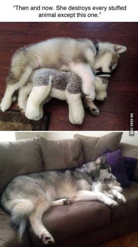 """Mammal - """"Then and now. She destroys every stuffed animal except this one. VIA 9GAG.COM"""