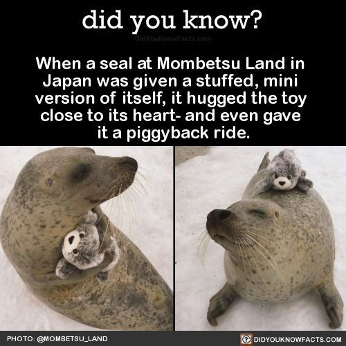 Organism - did you know? bYouknowFacts.com When a seal at Mombetsu Land in Japan was given a stuffed, mini version of itself, it hugged the toy close to its heart- and even gave it a piggyback ride. PHOTO: @MOMBETSU LAND DIDYOUKNOWFACTS.COM