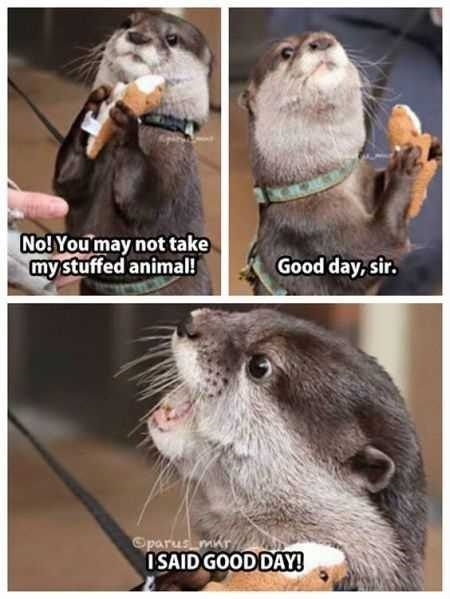 Mammal - No! You may not take mystuffed animal! Good day, sir. Oparus mir ISAID GOOD DAY!