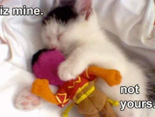 Cat - iz mine. not yours