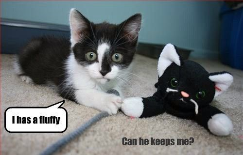 Cat - I has a fluffy Can he keeps me?