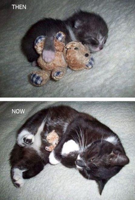 Cat - THEN NOW