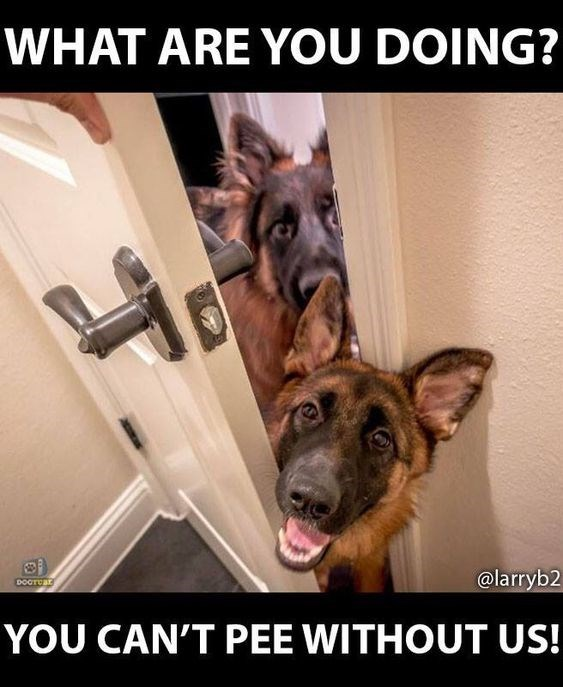 Dog - WHAT ARE YOU DOING? @larryb2 DOCTCar YOU CAN'T PEE WITHOUT US!