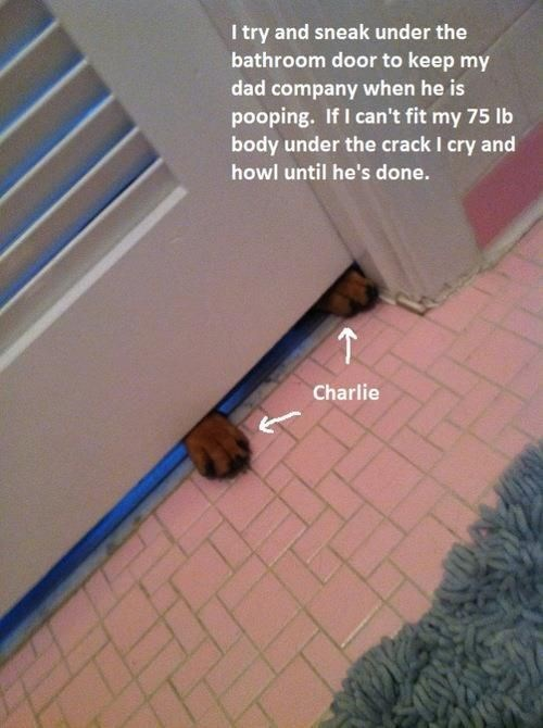 Floor - I try and sneak under the bathroom door to keep my dad company when he is pooping. If I can't fit my 75 lb body under the crack I cry and howl until he's done. Charlie