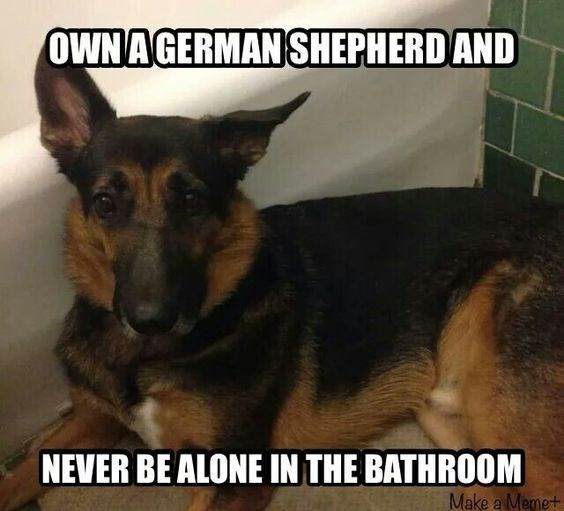 Vertebrate - OWN A GERMAN SHEPHERD AND NEVER BE ALONE IN THE BATHROOM Make a Memet