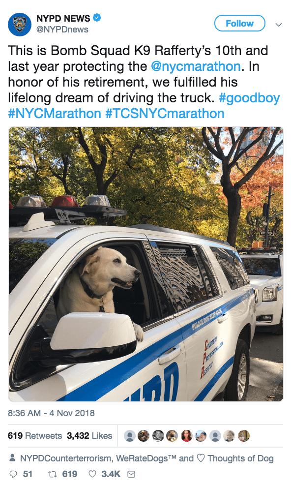 police dog protector good boy doggo retirement - 9233803264