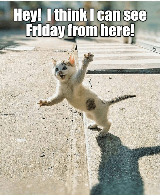 cat meme - Cat - Hey! Ithink I can see Friday from here!