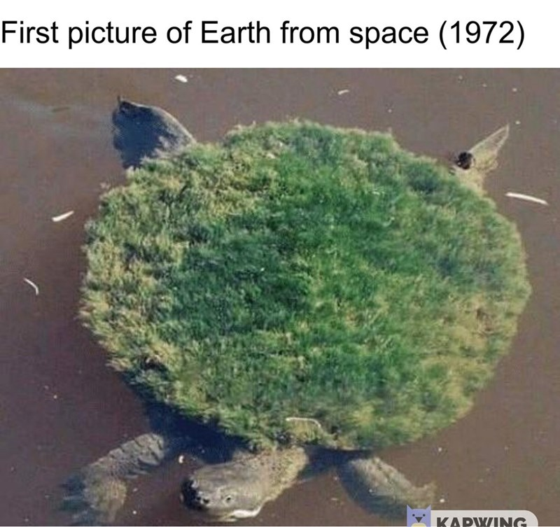 fake history meme about the first picture of Earth taken from space being of a turtle with grass on its back