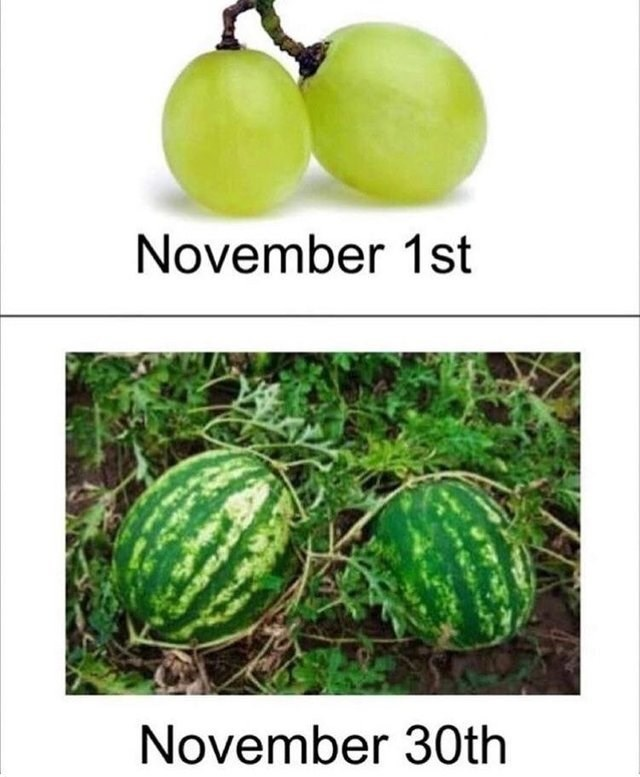 meme about no nut November with picture of grapes vs picture of watermelons