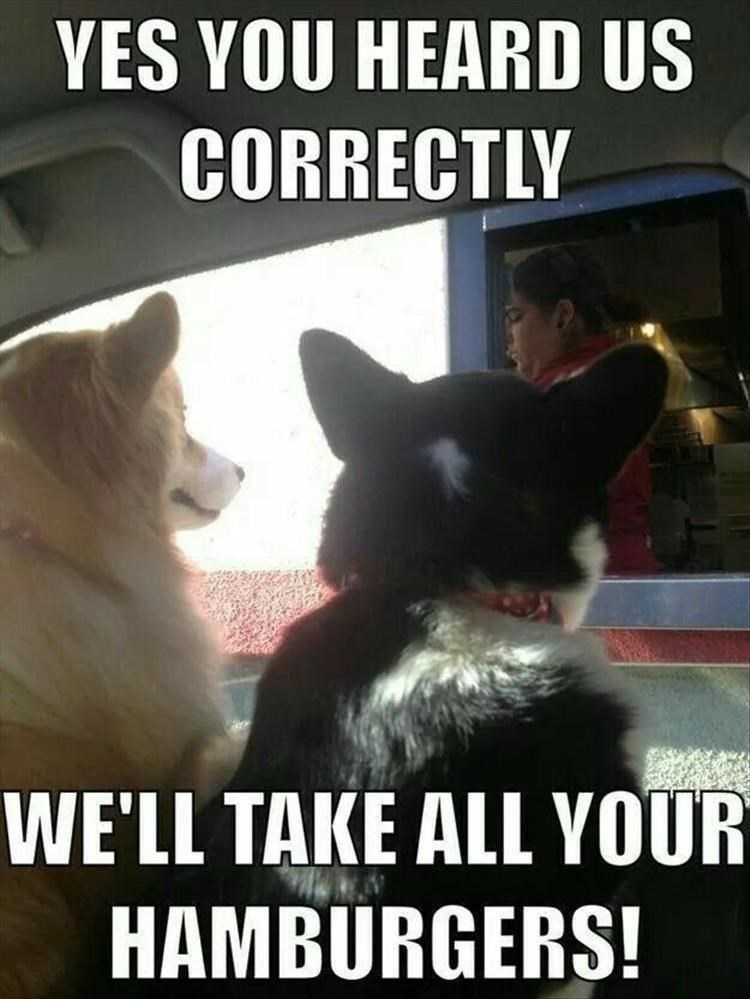 picture of two dogs at drive through window asking for all the hamburgers