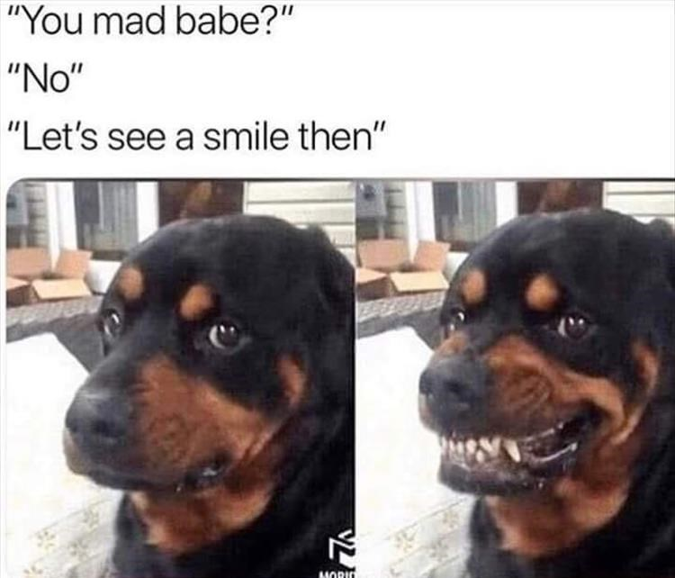 picture of serious dog being asked if they're mad and then grimacing when told to smile