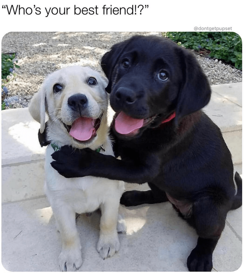 picture of Labrador puppy hugging another puppy when asked who's their best friend