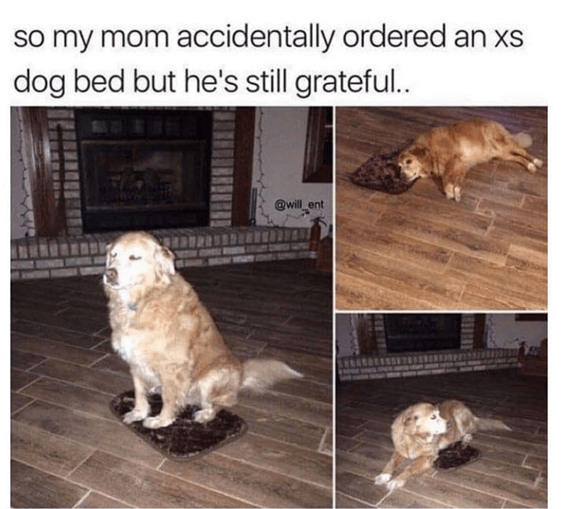 pictures of dog being grateful after mom accidentally orders too small dog bed