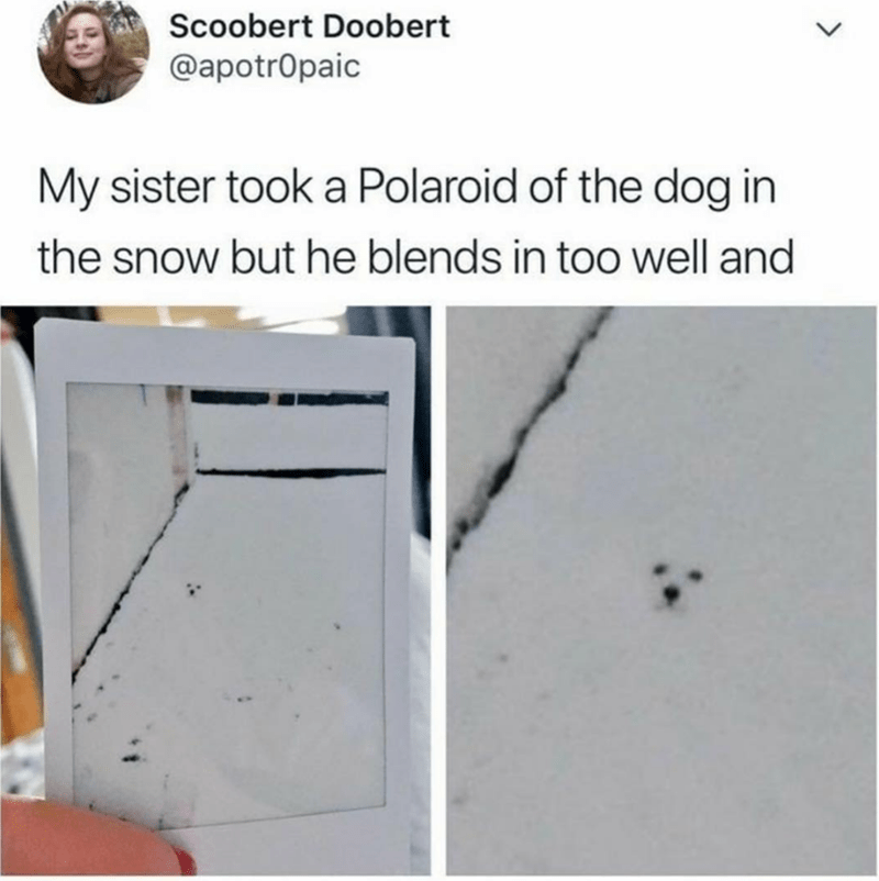 Polaroid of white dog blending perfectly in snow so that only its face is showing