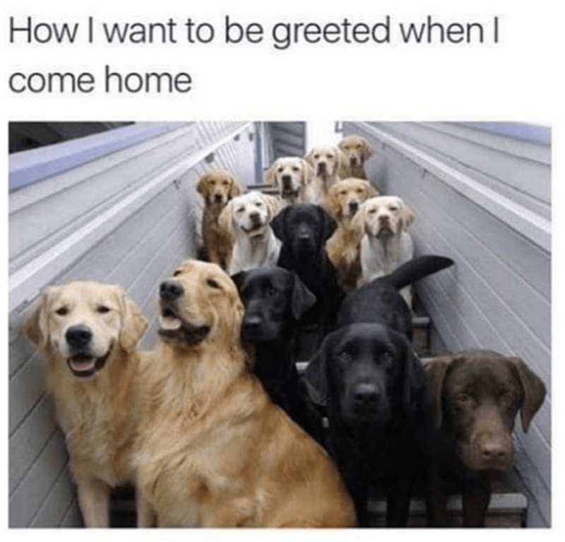 "picture of many dogs huddled together captioned with ""how I want to be greeted when I come home"""
