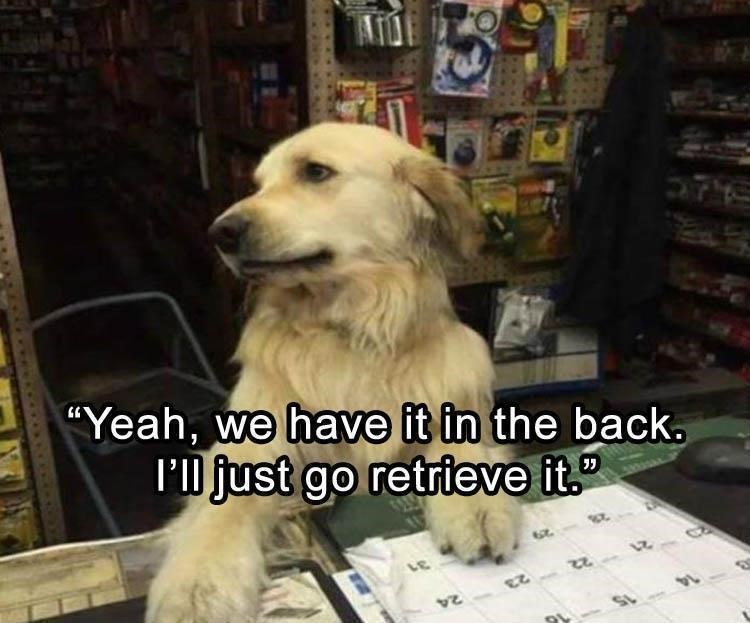 picture of dog working retail saying they'll go get something from the back