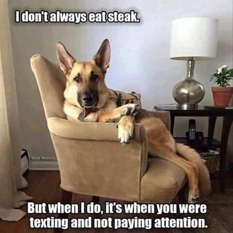 """Most Interesting Man in the World"" meme with dog sitting upright in armchair"