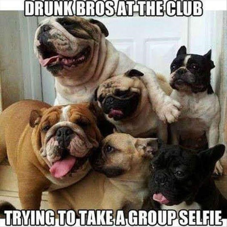 "picture of several dogs jumping over each other captioned with ""drunk bros trying to take group selfie"""