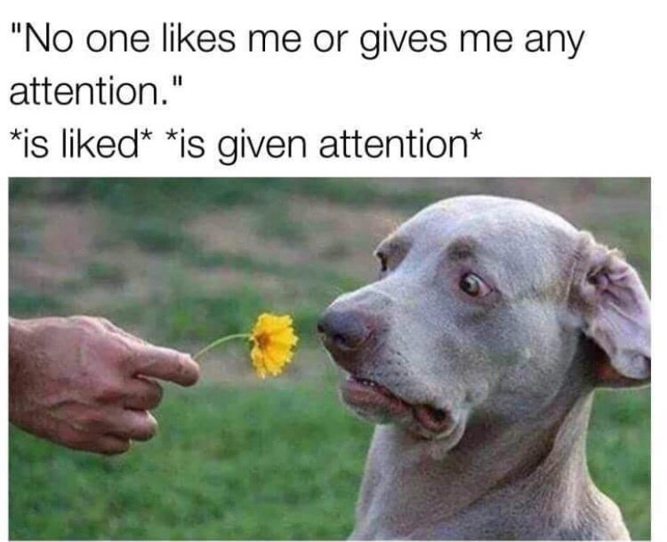 meme about complaining about not getting attention but shying away from it with picture of dog flinching away from flower