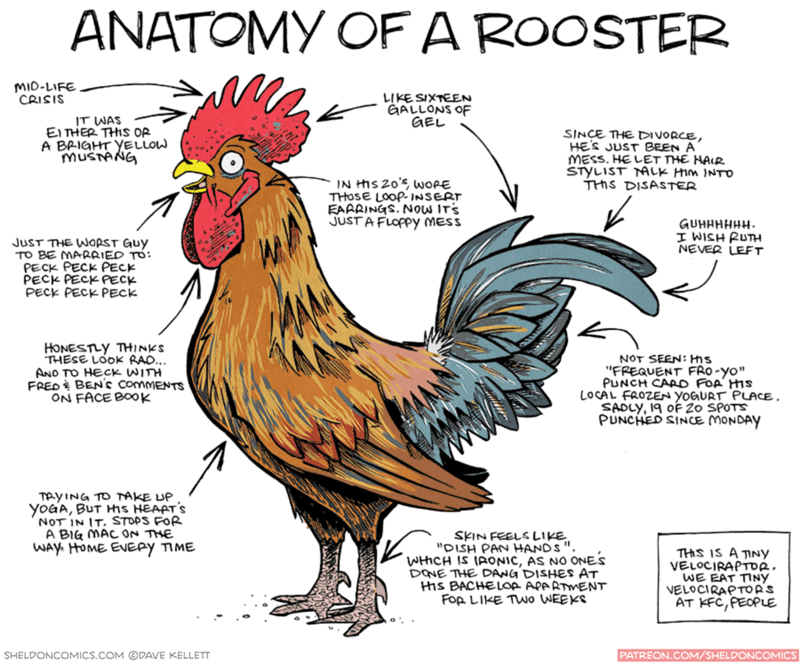 "Chicken - ANATOMY OFA ROOSTER mIo-LIFE CRISIS LIKE SIXTEEN EALLONS OF aEL IT WAS El THER THIS Op A BAIGHT YELLOW MUSTANG SINCE THE DIVORCE, HES JUST BEEN A MESS. HE LET THE HAIR STYLIST ALK Hm INTO THS DISASTER IN hS 20 WOPE THOSE LOOP INSERT EAARINGS. NOw ITS JUSTAFLOPPY MESS GUHHHHHH I WISH RUTH NEVER LEFT JUST THE WORST Guy TO BE MARAIED TO: PECK PECK PECK PECK PECK PECK PECK PECK PEck HONESTLY THINKS THESE LOOK RAO... ANO TO HECK WITH FRED BENS commENTS ON FACE BOOK NOT SEEN: Hs ""FREQUENT FR"