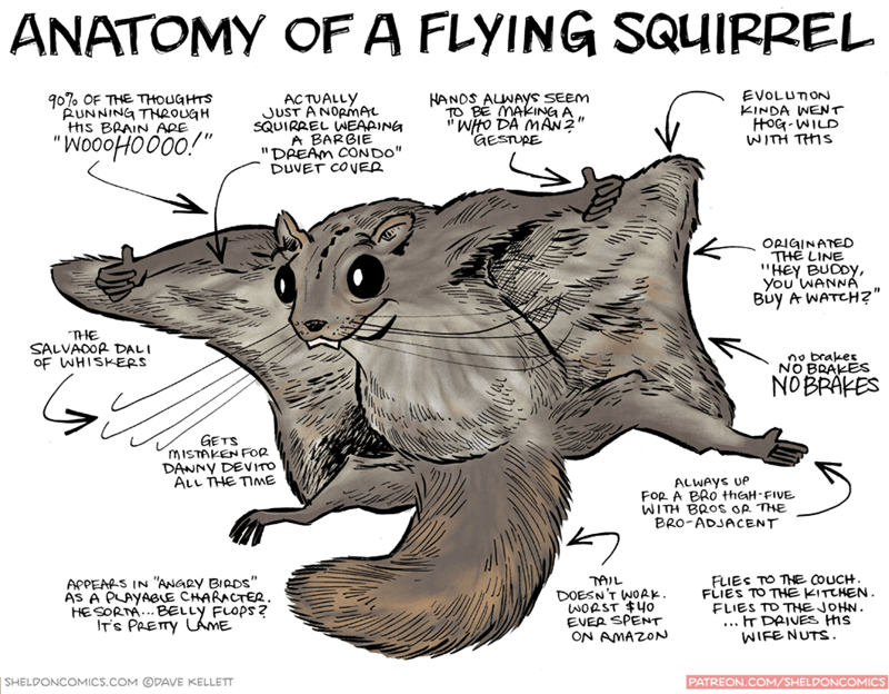 "Snout - ANATOMY OF A FLYING SQUIRREL EVOLUTON KINDA WENT HOG-WILD WITH THIS 90%0 OF THE THOUGHTS AUNNING THRouaH HS BRAIN ARE HANDS ALWAYS SEEM TO BE MAKING A 'WHO DA MAN2"" GESTURE ACTUALLY JUST ANORmAL SQUIRREL WEAAING A BARBIE ""DREAM CONDO"" DUVET COVER OPIGINATED THE LINE ""HEY BUDDY, You 'WANNAÁ Buy A WATCH?"" THE SALVADOR DALI OF WHISKERS no brakes NO BRAKES NOBRAKES GETS MISTAKEN FOR DANNY DEVITO ALL THE TIMmE ALWAYS UP FoR A BRO tHhaH-FIVE WITH BROS OR THE BRO-ADJACENT FLIES TO THE COUCH FLI"