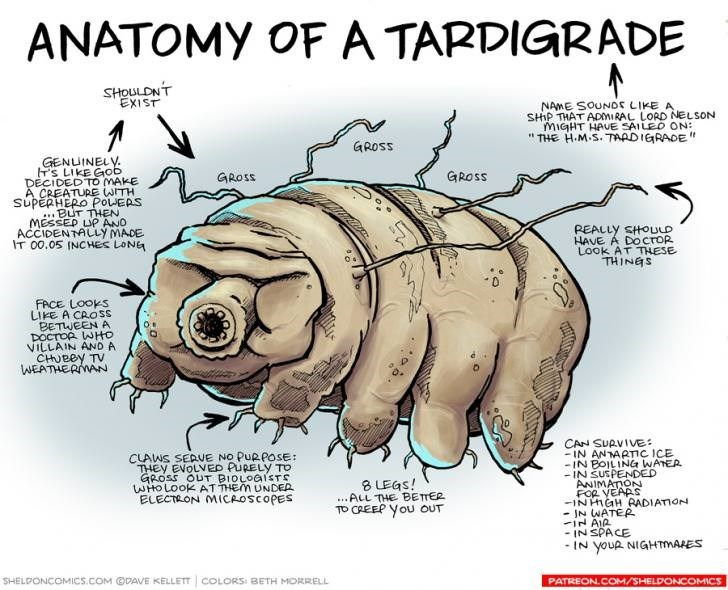 "Organism - ANATOMY OF A TARDIGRADE SHOULDNT EXIST NAME SOUNDS LIKE A SHIP THAT ADMIRAL LORD NELSON MIGHT HAVE SAILED ON: ""THE H.M.S. TAADIGRADE"" GROSS GENUINELY S LIKE Gob DECIDEDTO MAKE A CREATURE WITH SUPERHERO POLEAS ...BUT THEN MESSEP LP ANO ACCIDENTALLY MADE IT 00.05 INCHES LONG GROSS GROSS PEALLY SHOULD HAVE A DOCTOR Look AT THESE THINGS FACE LOOKS LIKE A CROSS BETWEEN A DOCTOR WHO VILLAIN AND A CHUBBY TV WEATHERMAN CAN SUAVIVE: -IN ANTAATIC ICE -IN BOILING WATEA -IN SUSPENDED ANIMATON FOR"