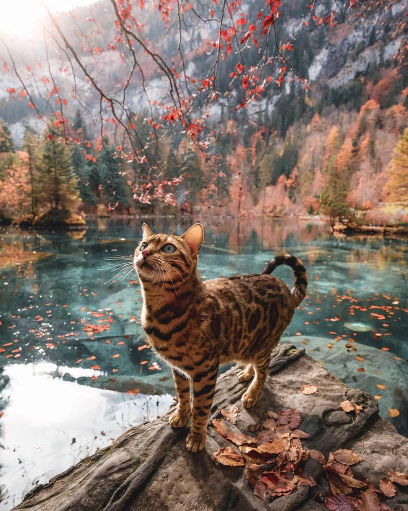cat gorgeous adventure - 9234145280