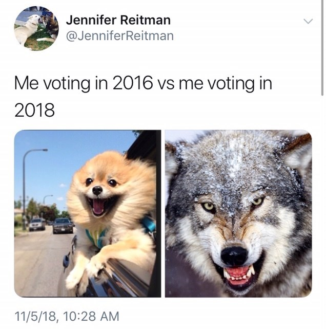 voting in 2016 vs voting in 2018 meme with picture of small fluffy dog vs snarling wolf