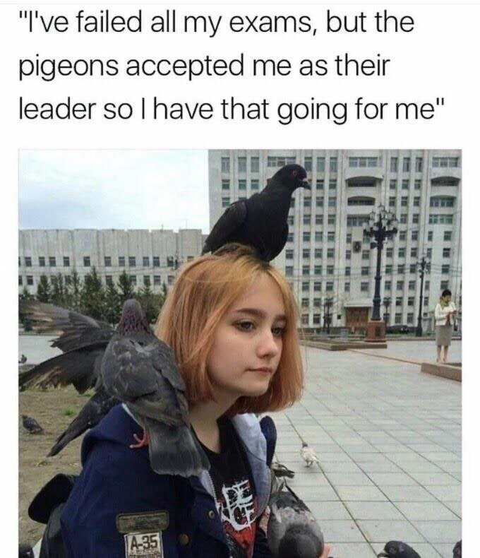 meme about pigeons accepting you as their leader with picture of girl with pigeons on her head