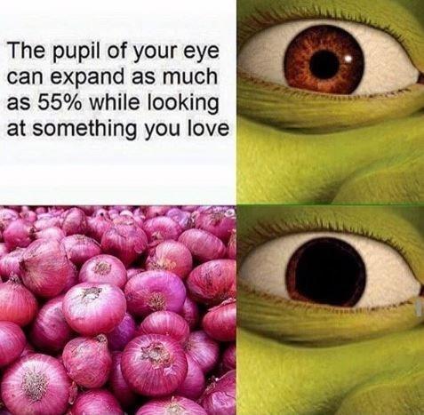 expanding pupil meme about Shrek loving onions