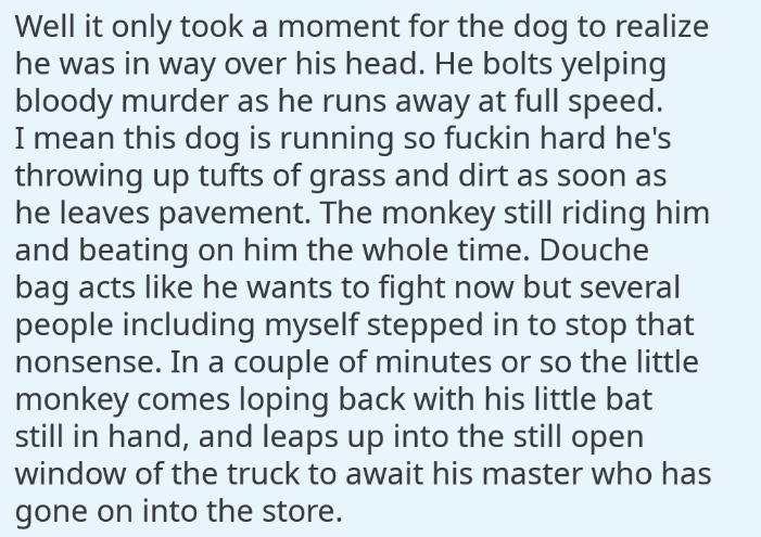 Text - Well it only tooka moment for the dog to realize he was in way over his head. He bolts yelping bloody murder as he runs away at full speed. I mean this dog is running so fuckin hard he's throwing up tufts of grass and dirt as soon as he leaves pavement. The monkey still riding him and beating on him the whole time. Douche bag acts like he wants to fight now but several people including myself stepped in to stop that nonsense. In a couple of minutes or so the little monkey comes loping bac
