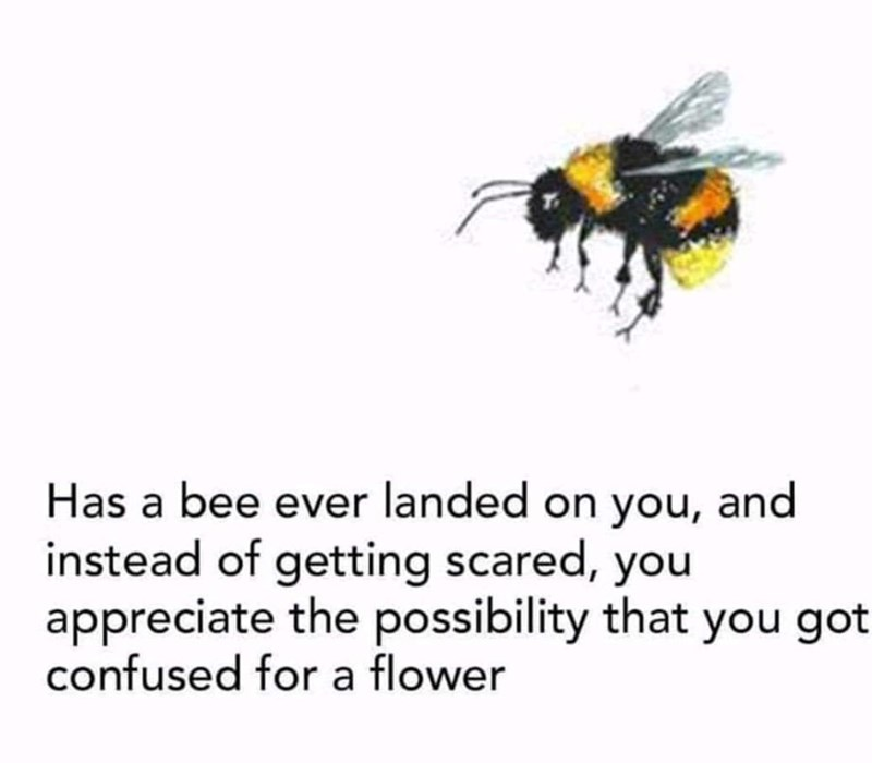 meme text about appreciating a bees landing on you because he confused you with a flower