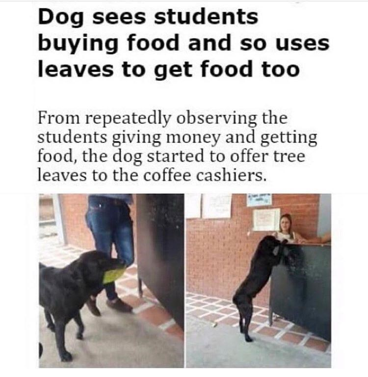 post about dog using leaves as a form of payment after observing students using cash
