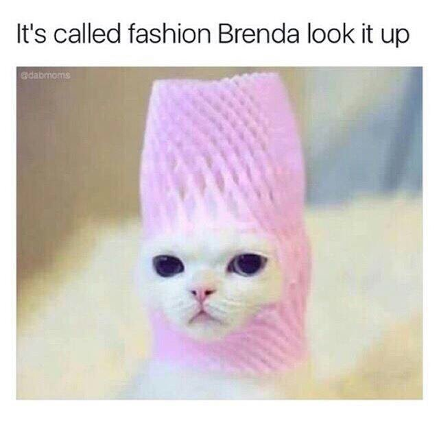 "Caption that reads, ""It's called fashion Brenda, look it up"" above a pic of a cat with a weird pink thing on its head"