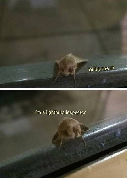 moth meme image about being a light bulb inspector
