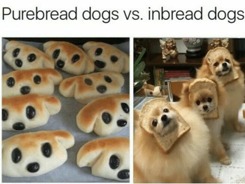 Dog breed - Purebread dogs vs. inbread dogs